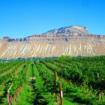 Palisade Wine Country: The Western Slope's Hidden Treasure