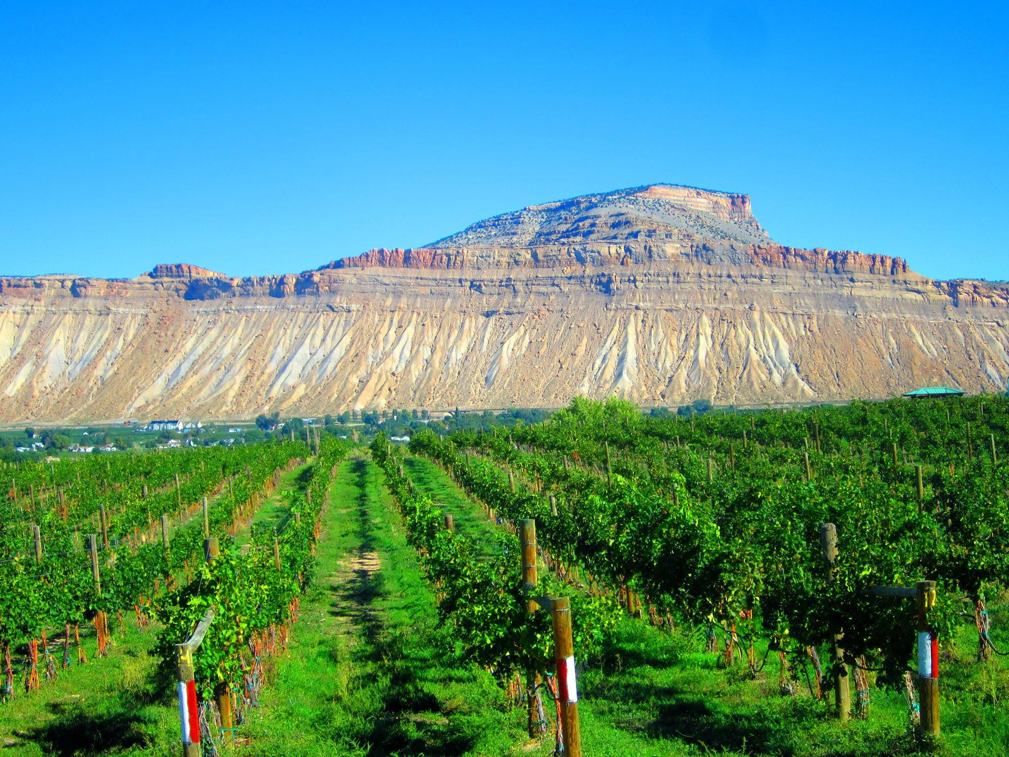 Palisade Wine Country